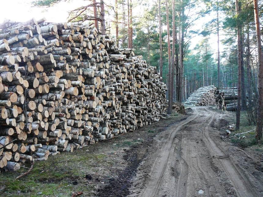 В прошлом году объём вырубки ликвидной древесины значительно вырос