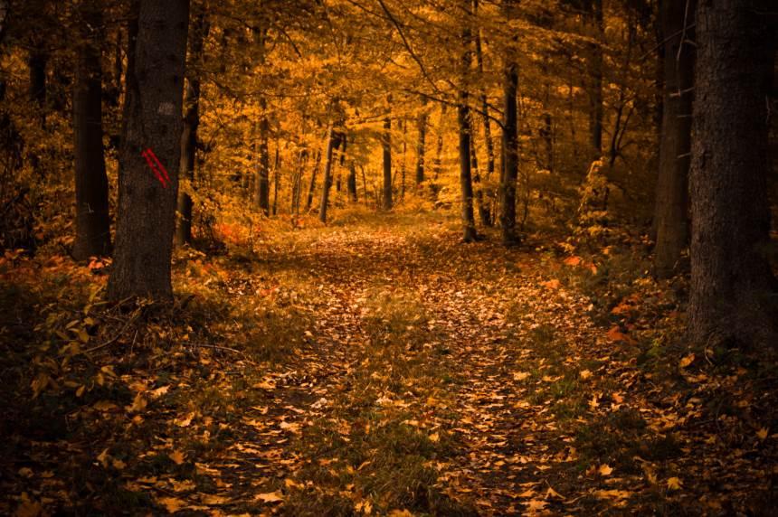 Miško darbai rudenį