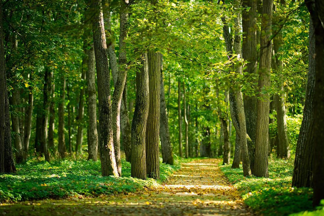 Что нужно знать, если хотите продать лес