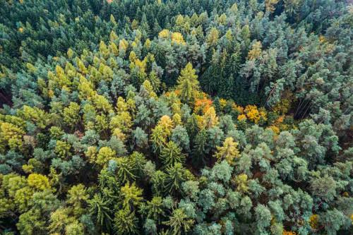 Valstybinių miškų urėdija žievėgraužių žvalgymui pasitelkia ir dronus