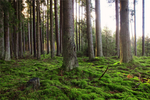 Miškuose kyla gaisrų pavojus