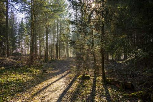 Per pusmetį miškų pažeista dvigubai mažiau