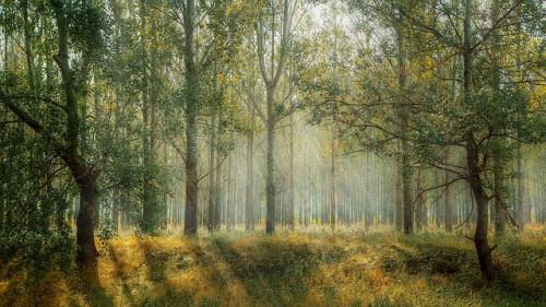 Jaunuolynų ugdymo darbai – sveikiems ir biologiškai įvairiems miškams formuoti